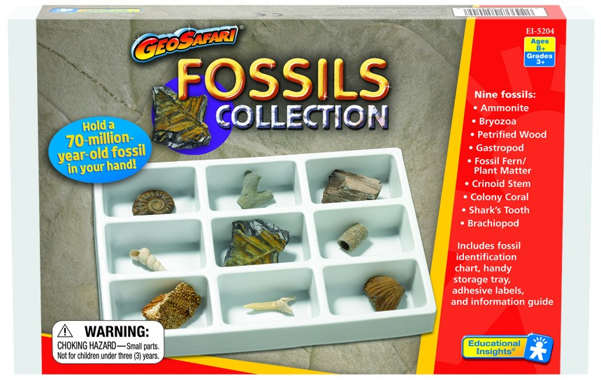 Kolekce fosílií