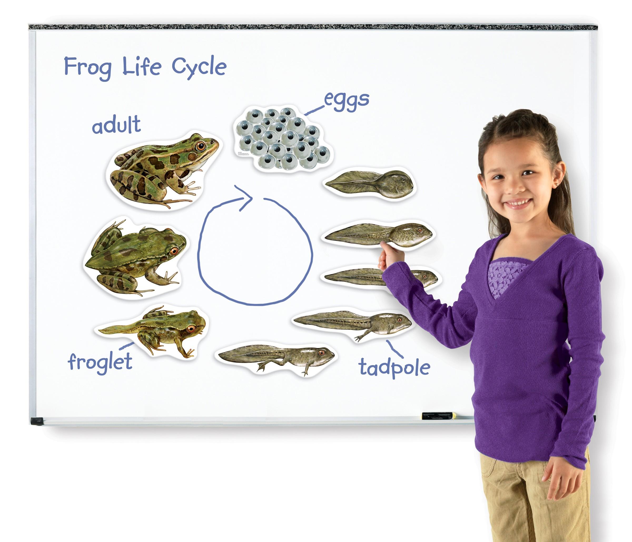 Magnetický životní cyklus - Žába