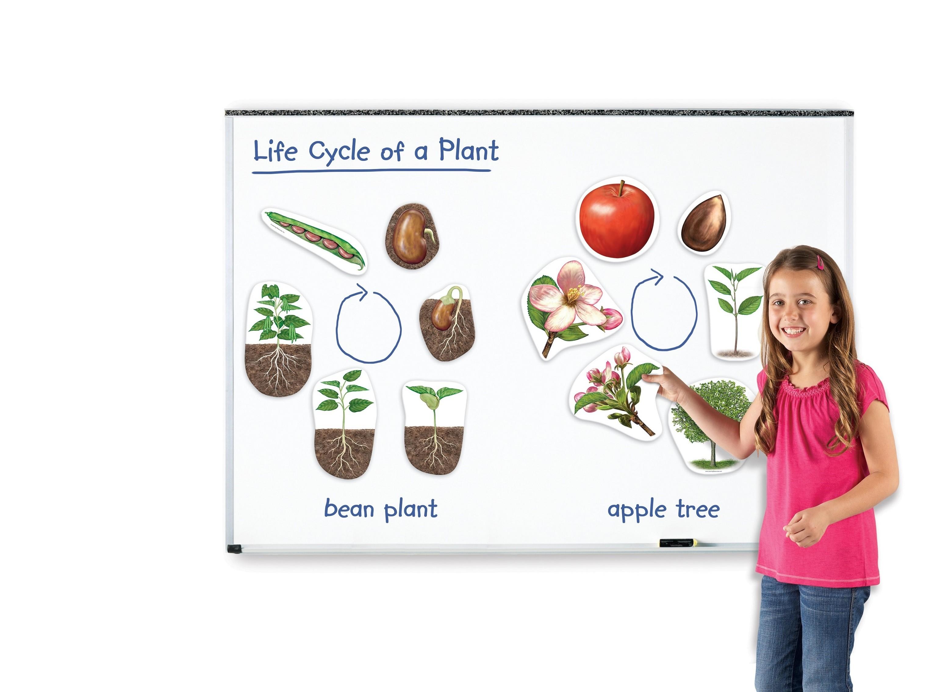 Magnetický životní cyklus - Rostlina