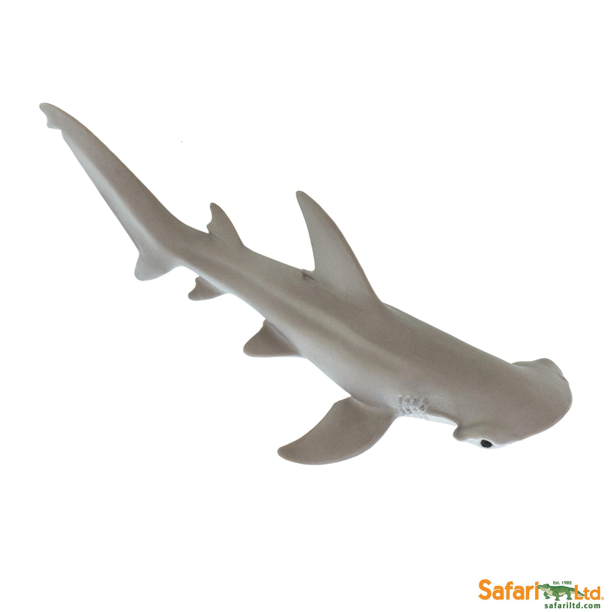 Kladivoun tiburo